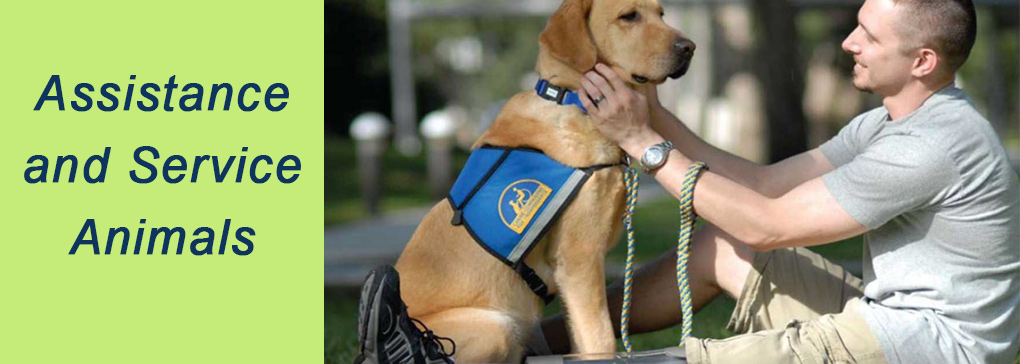 Assistance and Service Animals